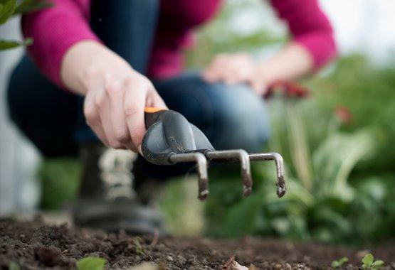 Plantez maintenant pour un jardin riche en parfums et en couleurs